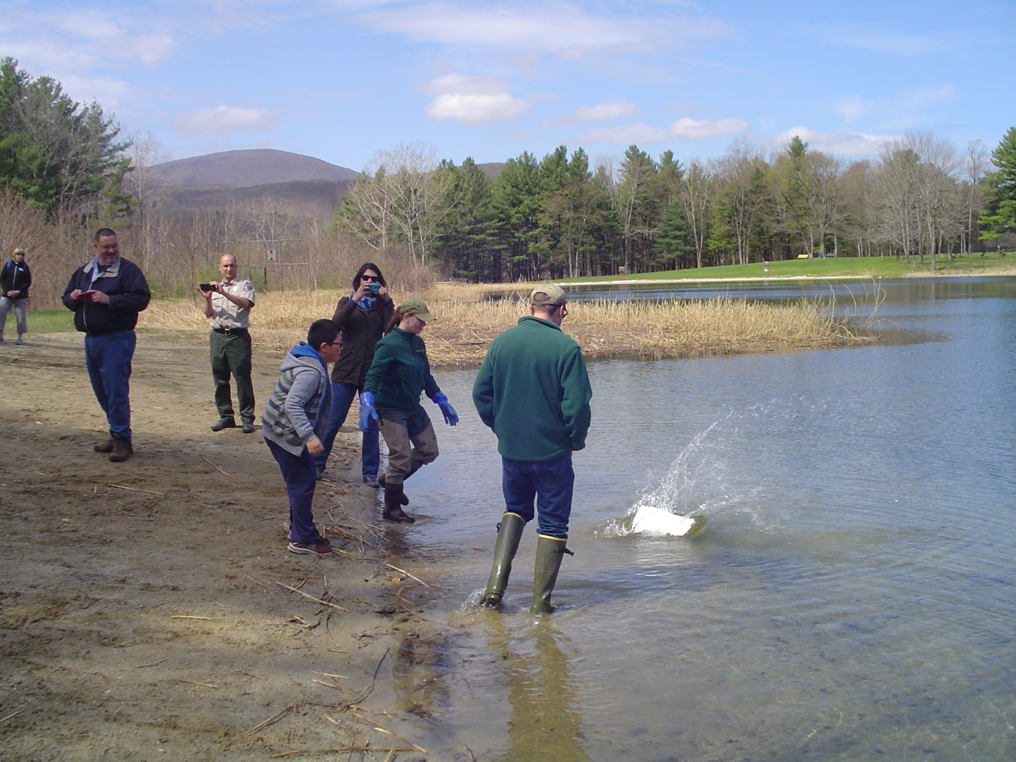 Berkshire outdoorsman hunting and fishing in the for Mass fish stocking